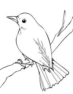 Nightingale clipart #5, Download drawings
