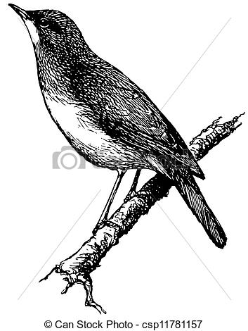 Nightingale clipart #4, Download drawings