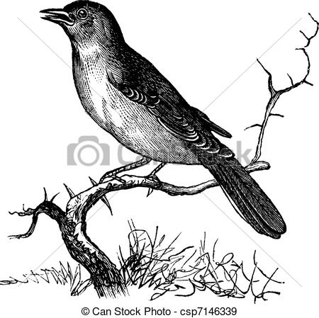 Nightingale clipart #1, Download drawings