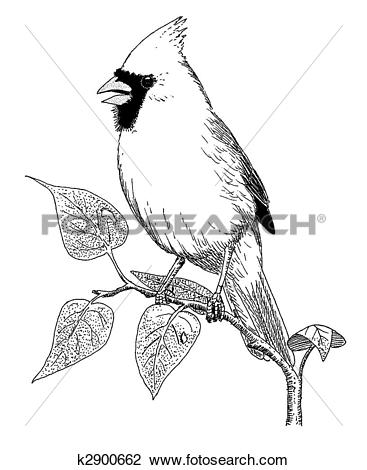 Northern Cardinal clipart #13, Download drawings