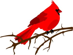 Northern Cardinal clipart #1, Download drawings