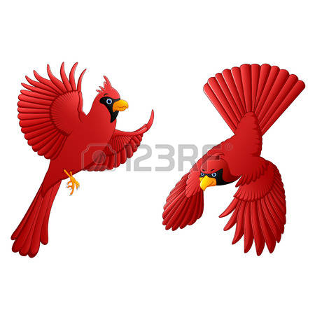 Northern Cardinal clipart #11, Download drawings