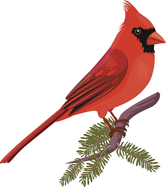 Northern Cardinal clipart #7, Download drawings