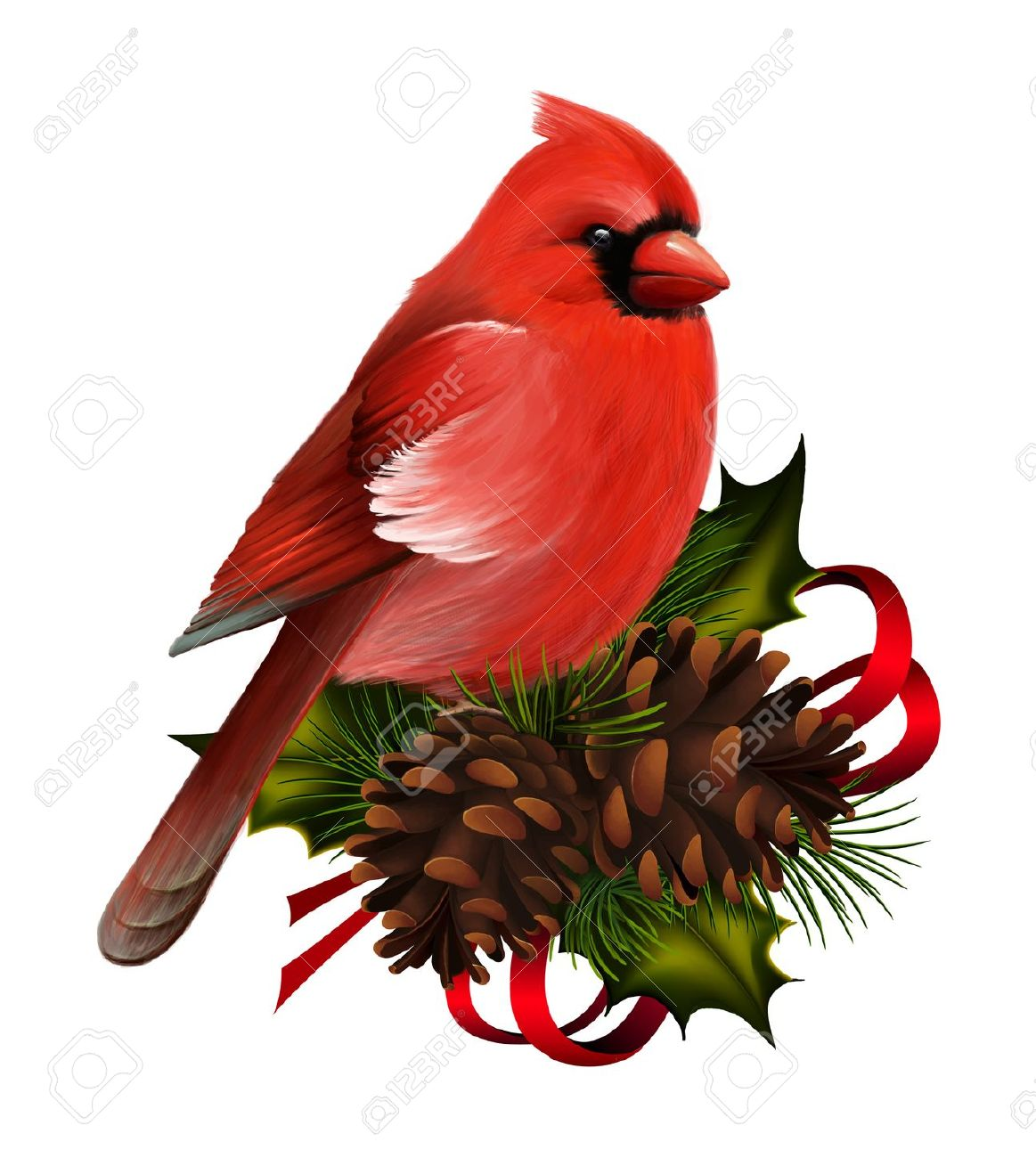 Northern Cardinal clipart #18, Download drawings