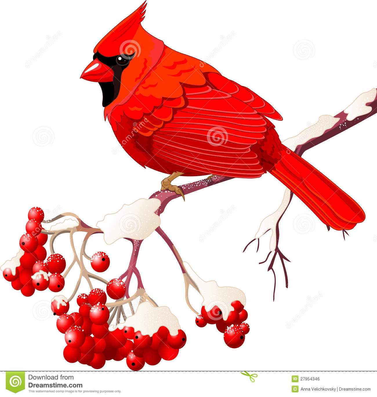 Northern Cardinal clipart #17, Download drawings