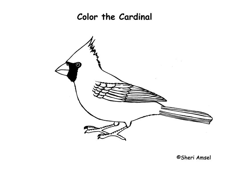 Northern Cardinal coloring #11, Download drawings