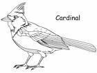Northern Cardinal coloring #4, Download drawings