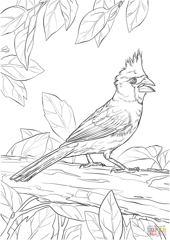 Northern Cardinal coloring #10, Download drawings
