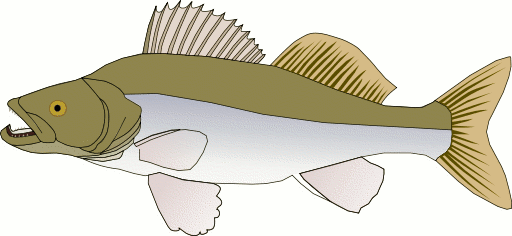 Northern Pike clipart #13, Download drawings