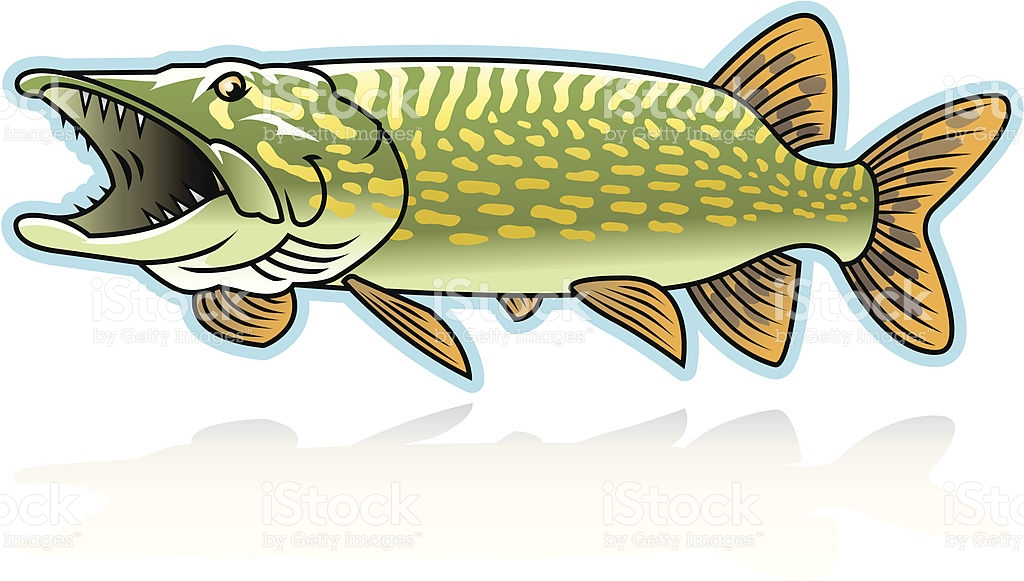 Northern Pike clipart #1, Download drawings