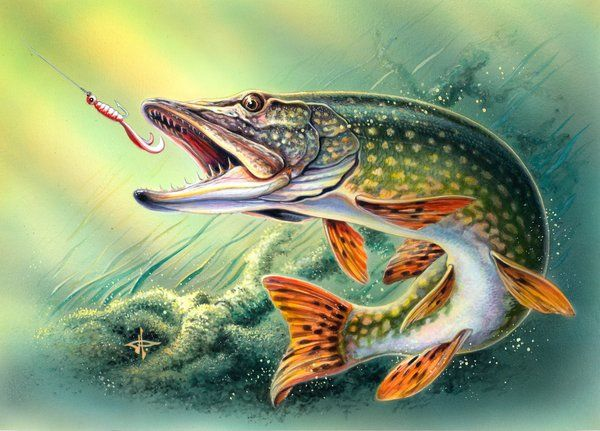 Northern Pike clipart #3, Download drawings