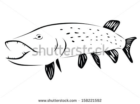 Northern Pike clipart #18, Download drawings