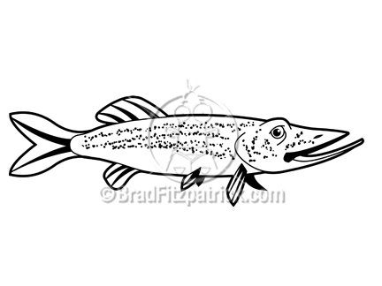 Northern Pike clipart #16, Download drawings