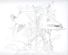Northern Pike coloring #4, Download drawings