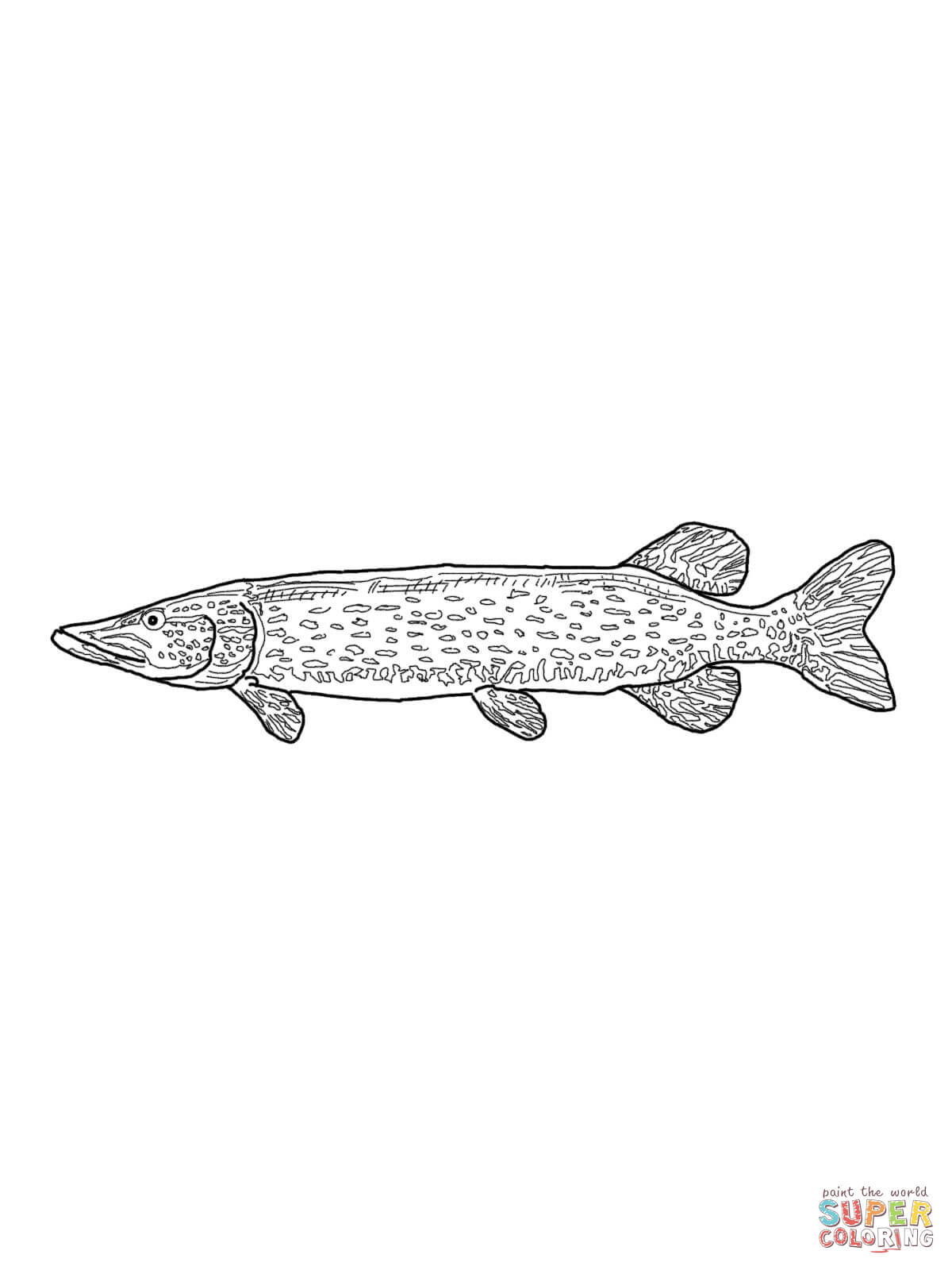 Northern Pike coloring #3, Download drawings