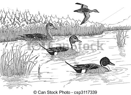 Northern Pintail clipart #5, Download drawings