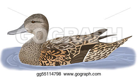 Northern Pintail clipart #18, Download drawings