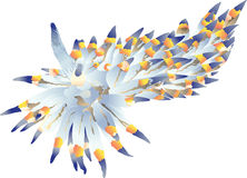 Nudibranch clipart #14, Download drawings