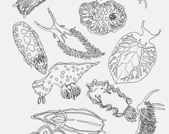 Nudibranch coloring #13, Download drawings