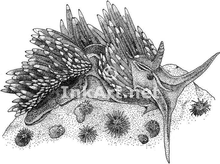 Nudibranch coloring #8, Download drawings