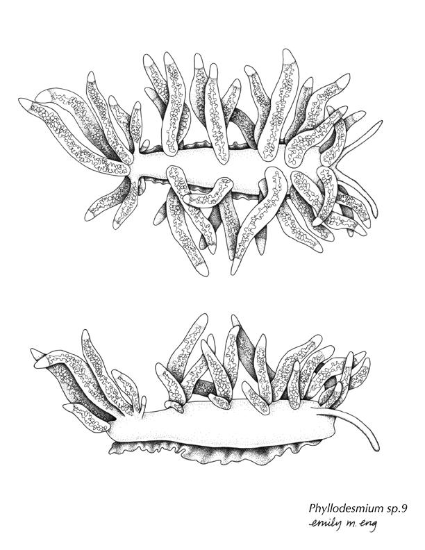Nudibranch coloring #16, Download drawings