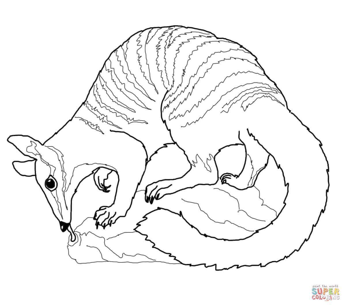 Numbat coloring #15, Download drawings