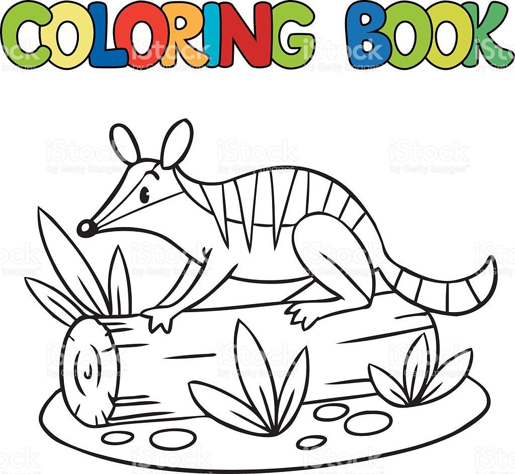 Numbat coloring #12, Download drawings