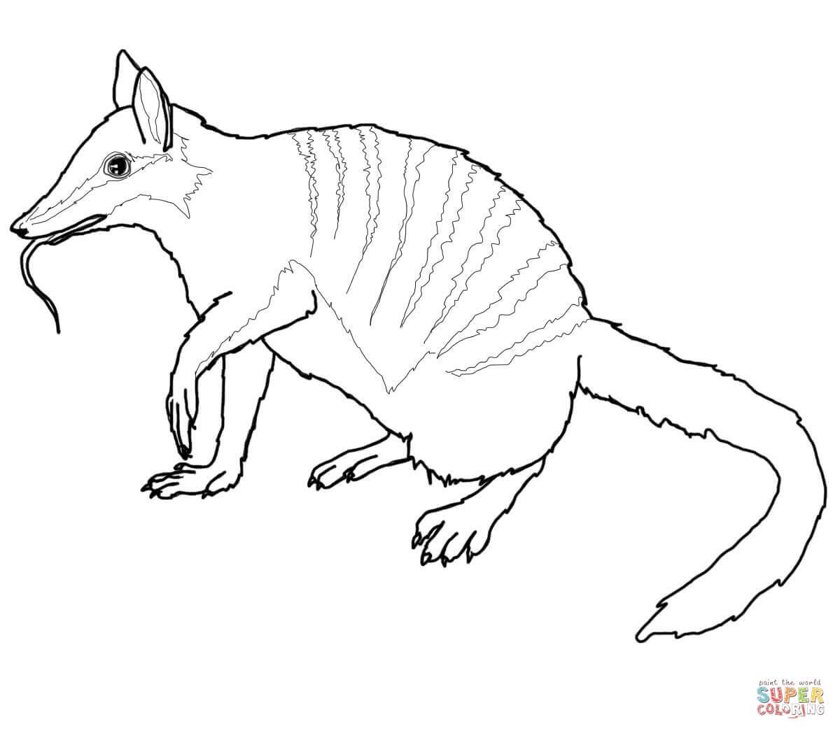 Numbat coloring #13, Download drawings