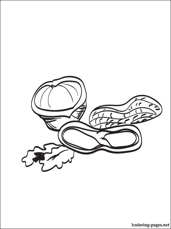 Nut coloring #12, Download drawings