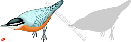Red-breasted Nuthatch clipart #7, Download drawings