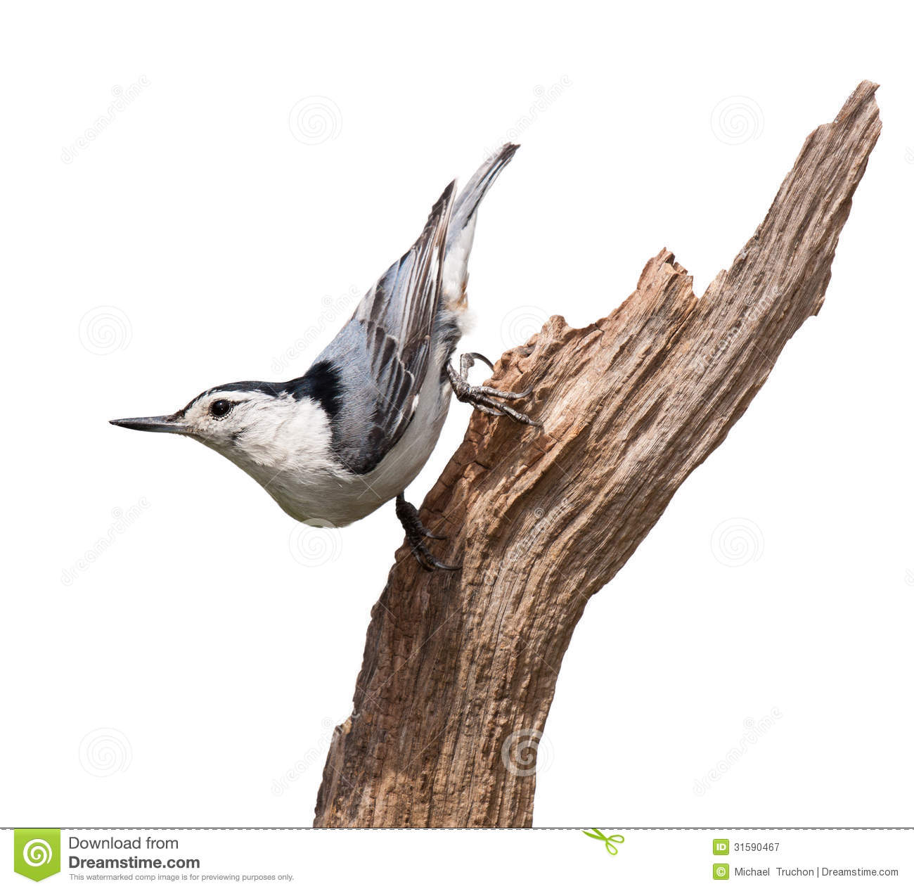 Red-breasted Nuthatch clipart #5, Download drawings