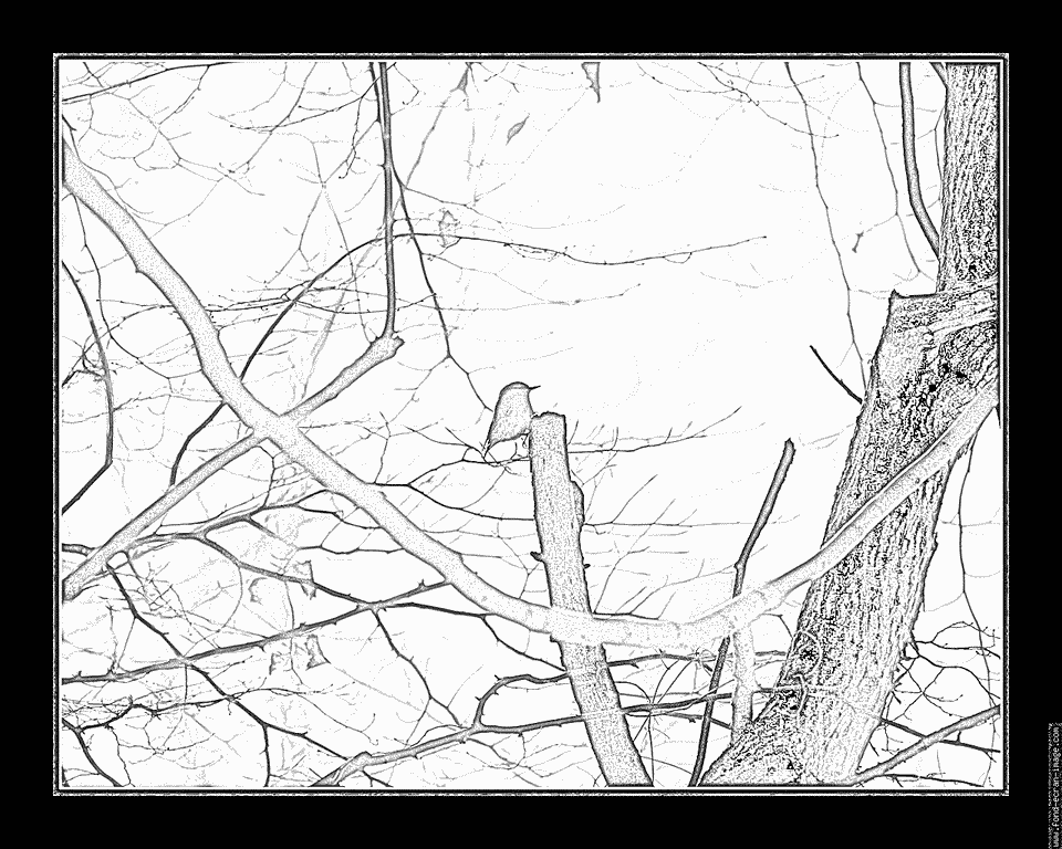 Nuthatch coloring #8, Download drawings