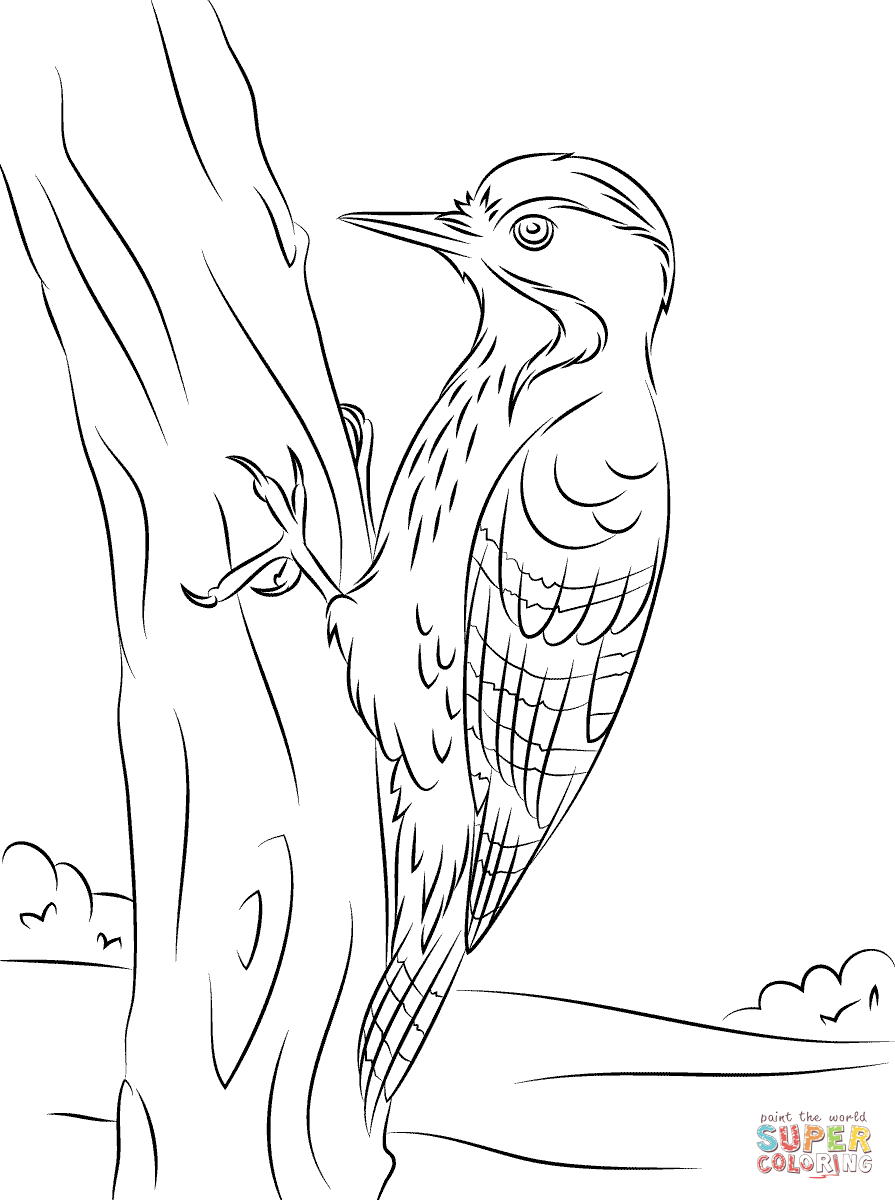 Woodpecker coloring #20, Download drawings