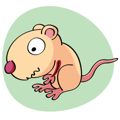 Nutria clipart #7, Download drawings