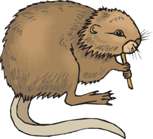 Nutria clipart #17, Download drawings