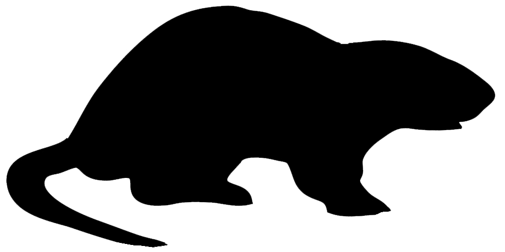 Nutria clipart #9, Download drawings