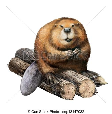 Nutria clipart #13, Download drawings