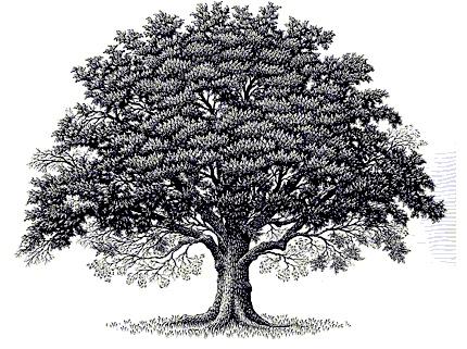 Oak Tree clipart #2, Download drawings
