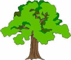 Oak Tree clipart #6, Download drawings