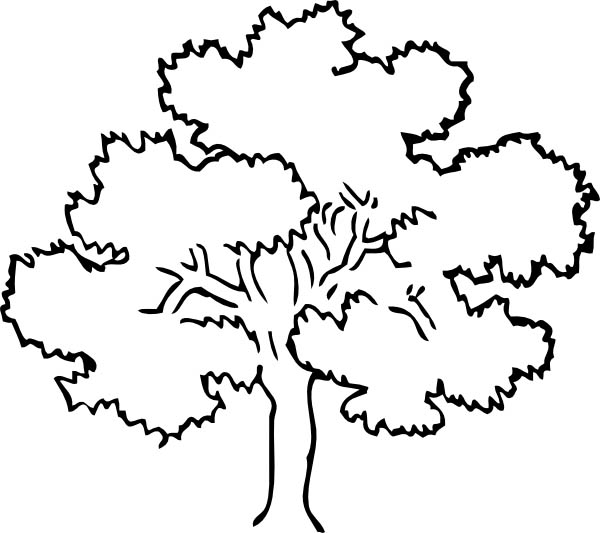 coloring pages of oak trees   Oak coloring, Download Oak coloring for free 2019