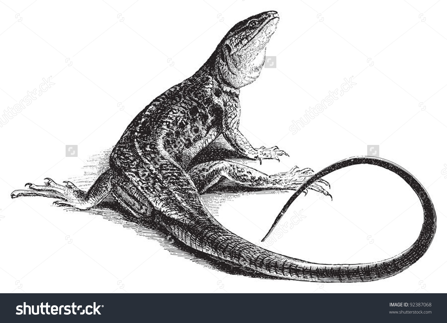 Ocellated Lizard clipart #15, Download drawings