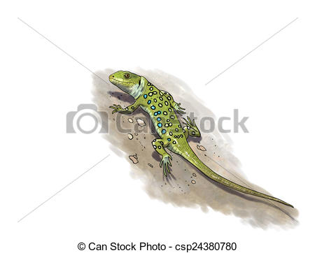 Ocellated Lizard clipart #14, Download drawings