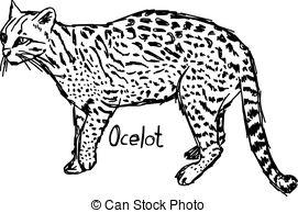 Ocelot clipart #10, Download drawings