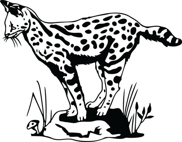 Ocelot clipart #11, Download drawings