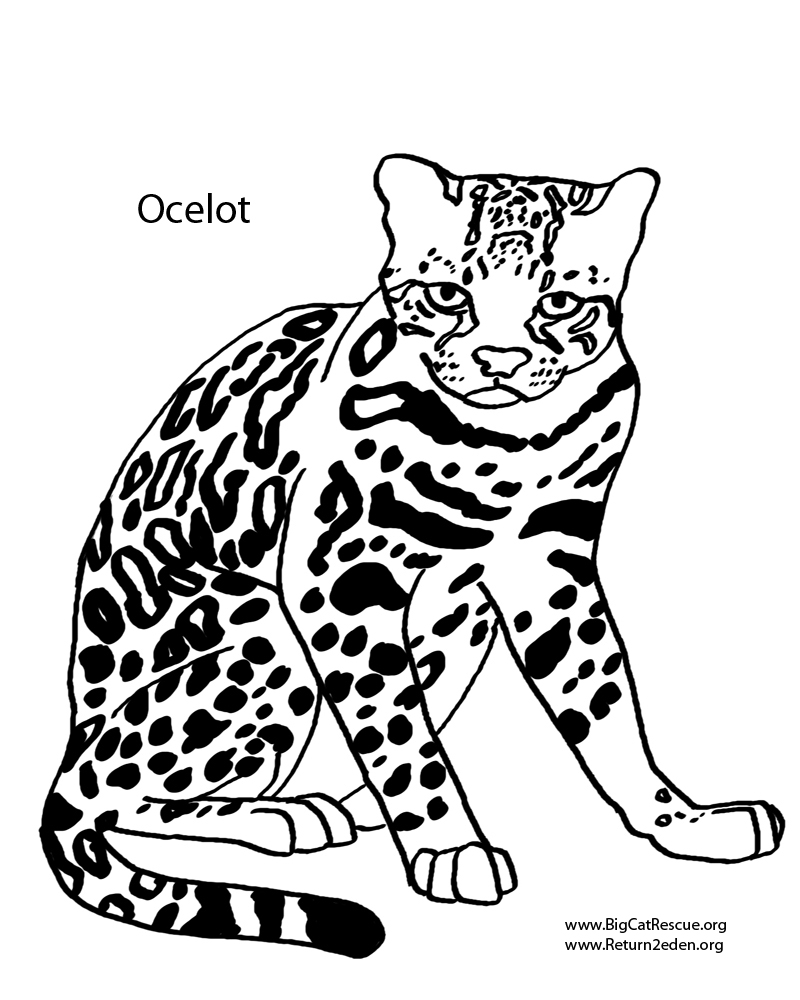Ocelot coloring #2, Download drawings