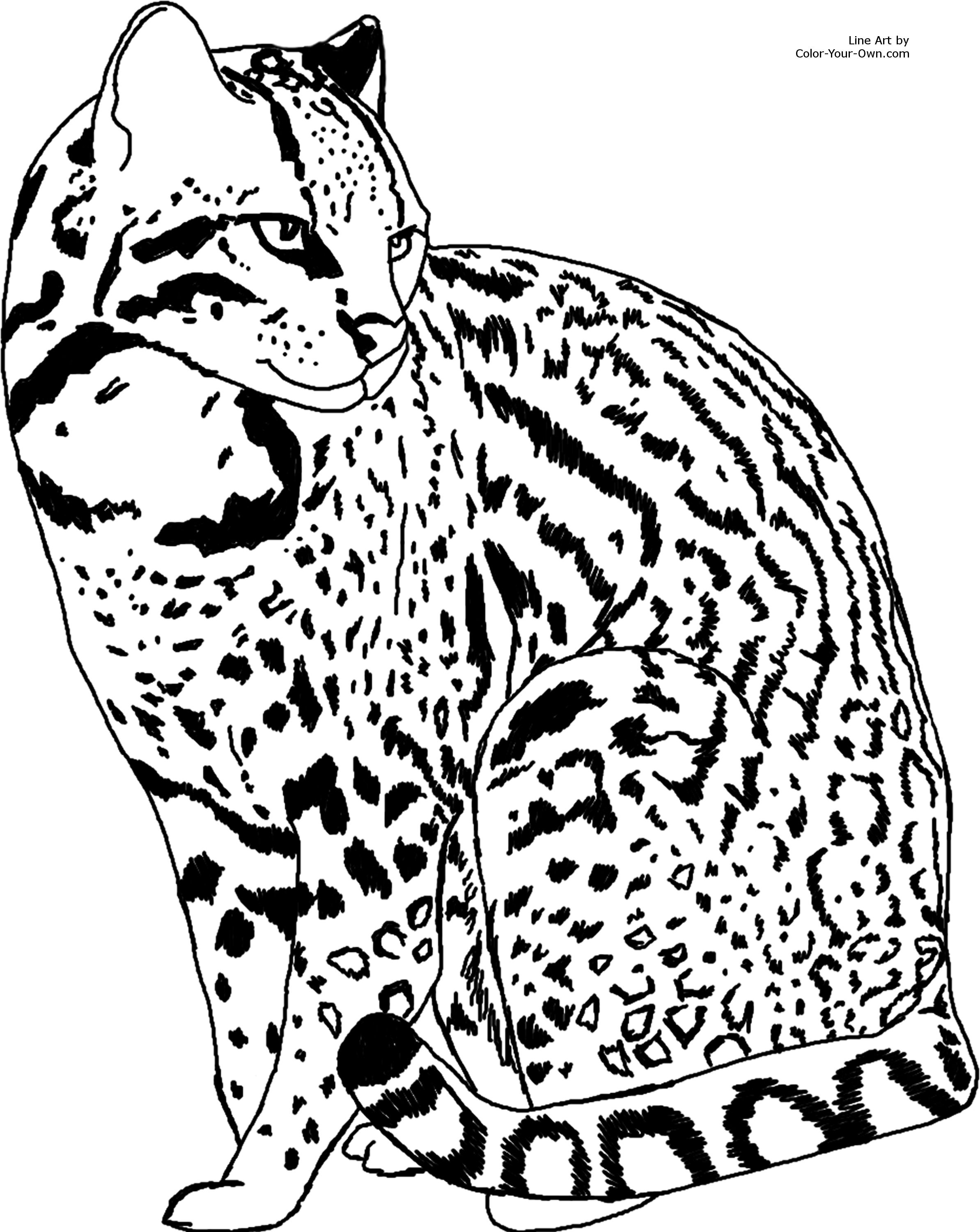 Ocelot coloring #15, Download drawings