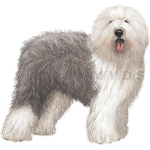 Old English Sheepdog clipart #1, Download drawings