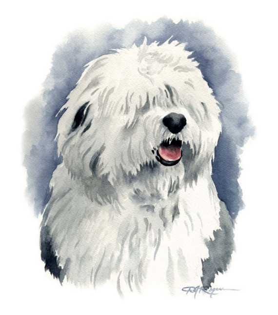 Old English Sheepdog clipart #7, Download drawings