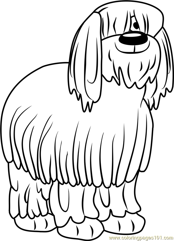 Old English Sheepdog coloring #8, Download drawings