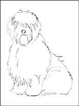 Old English Sheepdog coloring #7, Download drawings